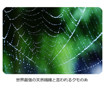 世界最強の天然繊維と言われるクモの糸